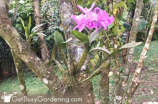 Pink flowering orchid plant growing on tree
