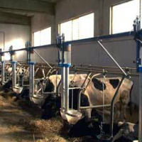 Коровник 55 фото нормы строительства как обустроить стойло для коров размер сарая на 5 голов схема проекта