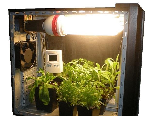 Гроубокс конопля системы семена гидропоники